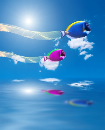 flying fish superimposement graphic design