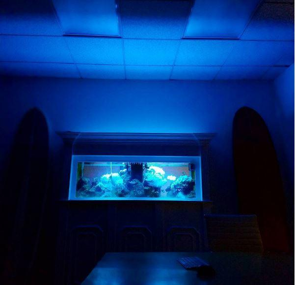 Our see through fish tank wall is amazing at night.